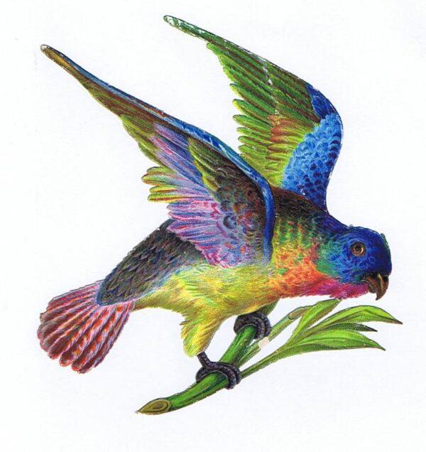 Pryd fugle